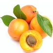 Apricot_kernel.jpg